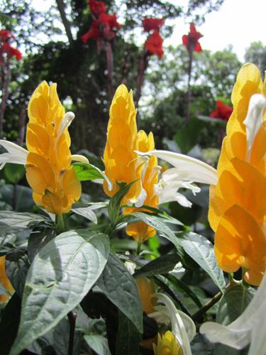 El Jardin de Celeste
