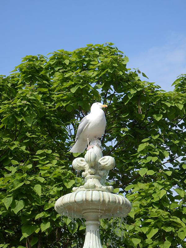 seagull bidet